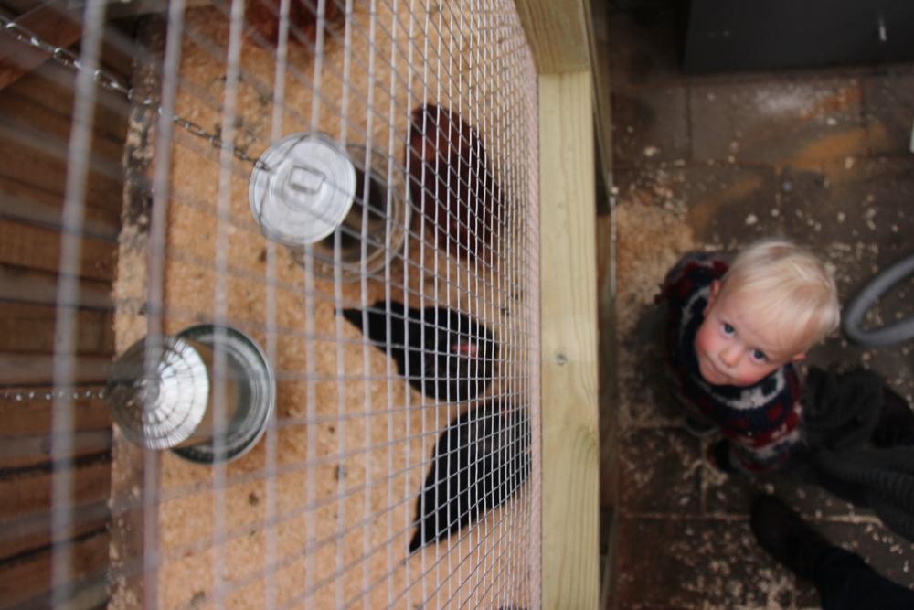 hens peephole